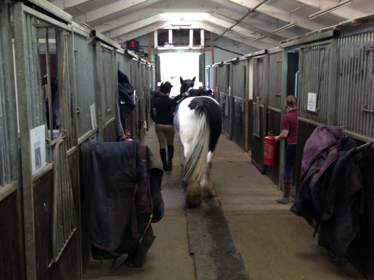 equestrian, barn, rider leading horse called Magpie